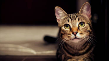Seguro de Salud para tu perro o gato.